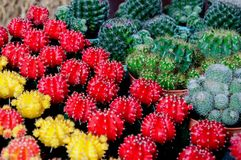 Cactus Images stock