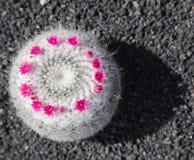 Cactus abstarct Stock Images