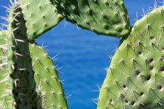 Cactus against blue sea Royalty Free Stock Photos