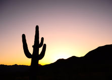 Cactus against pink sunset. Cactus in silhouette with the sun setting over the mountains in the background royalty free stock image