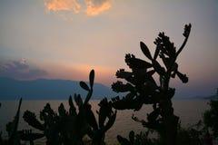 Cactus against sunset landscape Royalty Free Stock Photo
