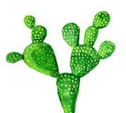 Cactus aislado en el blanco, ejemplo de la acuarela Fotos de archivo