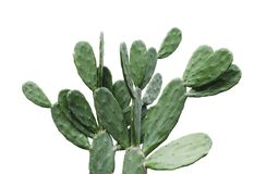 Cactus aislado en verano mínimo del fondo blanco imagen de archivo