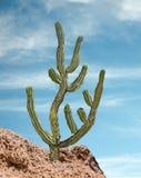 Cactus al deserto fotografia stock