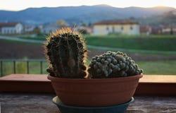 Cactus alla luce di sera Fotografia Stock