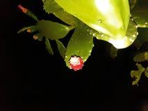 Cactus alla notte immagine stock