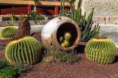 Cactus in Amphora. In a mediterranean garden Stock Photography