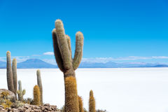Cactus And Salt Royalty Free Stock Photography
