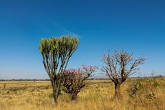 Free Cactus And Trees Bush Landscape In Africa Royalty Free Stock Photos - 119076578