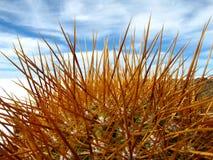 Cactus, appartamenti del sale, Bolivia Immagine Stock