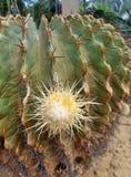 Cactus appuntiti in cupola geodetica nel parco del Ram IX di Suan Luang Phra Immagini Stock