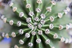 Cactus appuntito Fotografia Stock Libera da Diritti