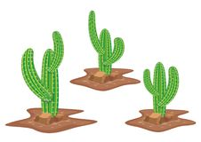 Cactus Vector. Cactus with arid soil, stone Vector illustration Royalty Free Stock Image