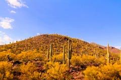 Cactus in Arizona Fotografia Stock Libera da Diritti