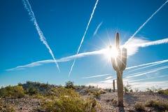 Cactus Arizona Desert Sun. A saguaro cactus in the foreground of a desert scene near Phoenix, Arizona. With sun flare and jet created clouds Stock Photography