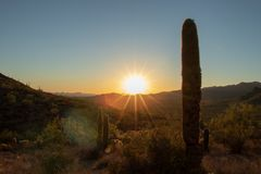 Cactus in the Arizona Sun at sunset. Saguaro cactus in the hot, dry Arizona Sun at sunset. Tuscon, Arizona royalty free stock photo
