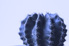 Cactus. Art Gallery Fashion Design. Minimal Still Life. Green Mo stock photography