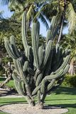 Cactus, Aruba, Carribean Sea Stock Photos