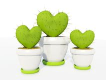 Cactus as heart Royalty Free Stock Photo