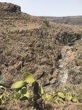 Cactus au-dessus du canyon images libres de droits