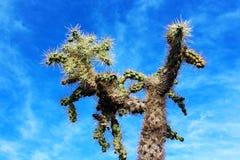 Cactus au paysage de parc national Photos libres de droits