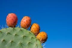 Cactus avec des fruits contre un ciel bleu profond Image stock