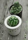 Cactus avec le piquant dans des pots images stock