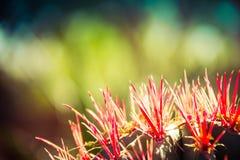 Cactus avec les transitoires rouges image stock
