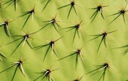 Cactus Background. Close-up of a pear cactus Stock Photos