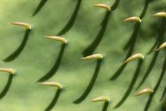 Cactus Background Royalty Free Stock Photo