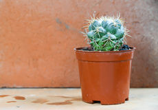 Cactus background and decorated Royalty Free Stock Images