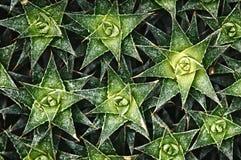 Cactus background pattern Stock Image