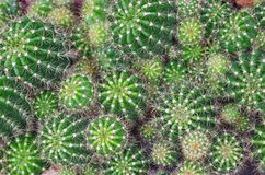 Cactus background Royalty Free Stock Photos