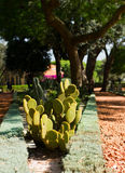 Cactus in Bahai garden Stock Photo