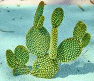 Cactus of the Bahai Garden stock photography