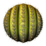 Cactus Ball Stock Photography