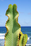 Cactus Beach Stock Photos