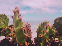 Cactus on the beach from Fortaleza Ceara Brazil stock photos