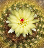 Cactus. Beautiful cactus in the garden Royalty Free Stock Image