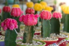 Cactus Stock Photo