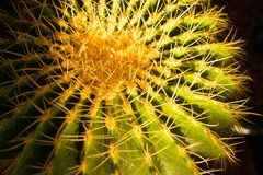 Cactus Beauty under the sharp spikes. stock images
