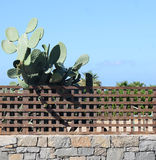 Cactus behind the fence. On the background of blue sky Stock Images