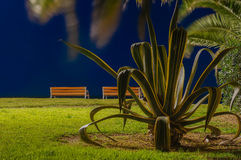 Cactus and Bench. Cactus in La Pineda province of Tarragona (Spain) Photographed over the night in Long Exposure royalty free stock photography