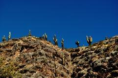 Cactus bij de berg Stock Fotografie