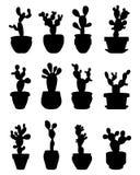 Cactus bij ingemaakt Royalty-vrije Stock Afbeeldingen