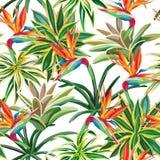 Cactus bird of paradise flowers seamless pattern white backgroun Royalty Free Stock Photography