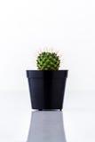 Cactus in black pot Stock Photos