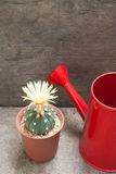 Cactus with blooming flower and red watering can. Cactus with blooming yellow flower and red watering can on concrete background stock photos