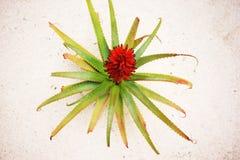 Cactus blossom Stock Image
