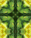 Cactus Blossom Cross. Kaleidoscope cross from photo of prickly pear cactus blossoms Royalty Free Stock Image